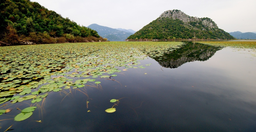 Shkodra Lake National Park 1