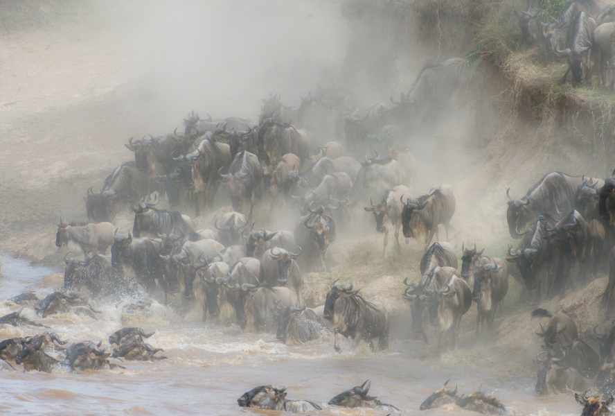 Crossing Mara River 1
