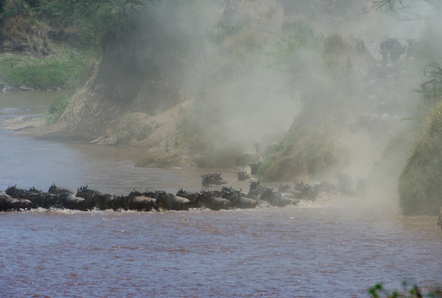 Crossing Mara river 2